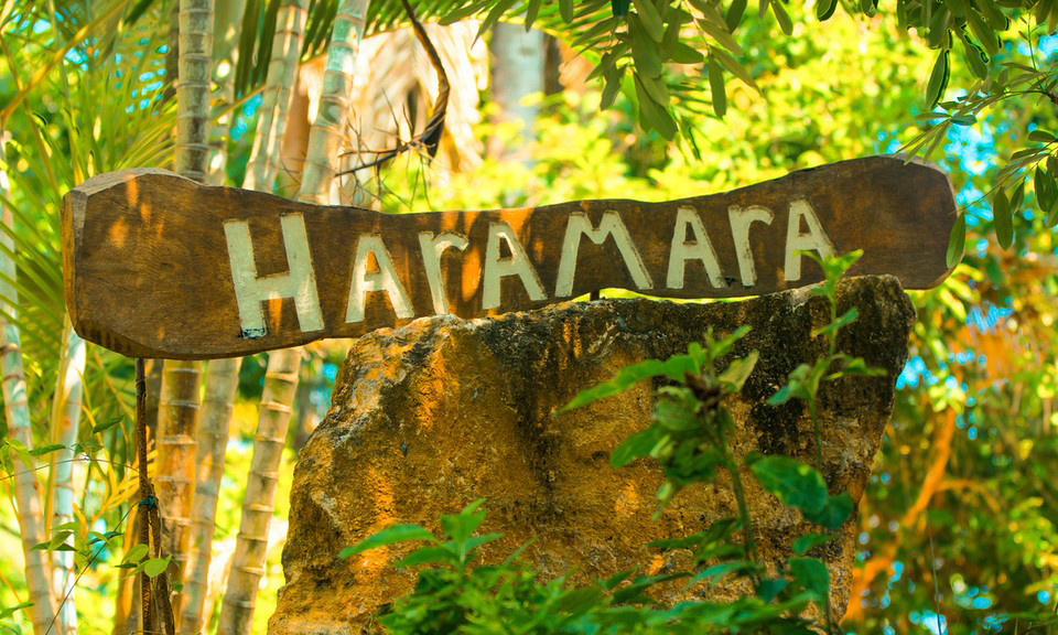 Yoga in Mexico with Jeanne Heileman: Haramara Retreat